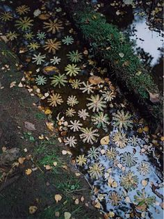 I imagine how magically it would be to find a piece of Tim Pugh 's art while hiking in the woods. Art Et Nature, Nature Artists, Nature Crafts, Land Art, Art Environnemental, Ephemeral Art, Photos Originales, Landscape Artwork, Environmental Art
