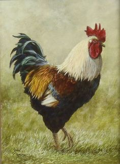 Rooster by John Crouse