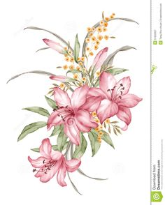 watercolor-illustration-flower-set-simple-white-background-51532927.jpg (1043×1300)