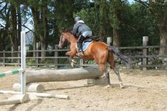 Cindy hadnt jumped in 12 years! Looks like she's still got it! Cross Country Jumps, How To Gain Confidence, Horses For Sale, Horse Riding, Hunting, Animals, Animaux, Animal, Animales
