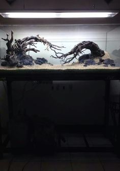 Haunted Forest tank?
