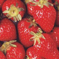 Consigue tus propias semillas de fresas o frutillas para sembrarlas en casa | Upsocl