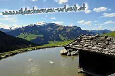 kitzbueheler-alpen-essel-super-extrem-gut-aurach-wildpark-esel-klaus-panorama Super, Mountains, Nature, Travel, Donkeys, Viajes, Traveling, Nature Illustration, Off Grid