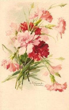Vintage carnations postcard ~ Catherine Klein
