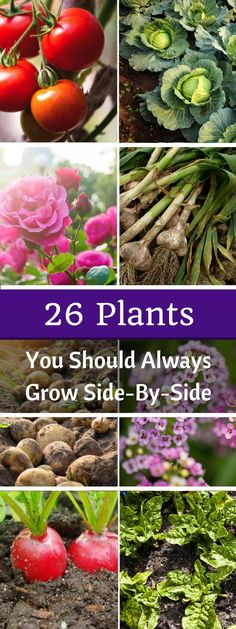 26 Plants You Should Always Grow Side-By-Side