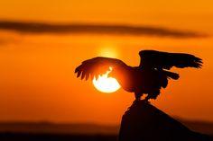 Take off to the sunrise by Hidetoshi Kikuchi on 500px