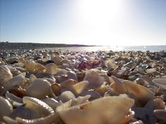 The famous seashells of Sanibel Island Beach  Miss Ft. Myers.