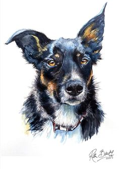 Watercolour and ink dog portrait of a Border Collie called Scout.  Ruth Brady, Pet Portrait Artist