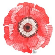 Red Poppy from http://www.oanabefort.com/
