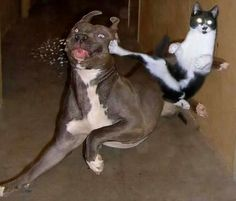 Cats are amazing hunters. It's no wonder these kitties are real ninja cats! Check them out here. Funny Animal Memes, Cute Funny Animals, Cat Memes, Funny Cute, Funny Dogs, Super Funny, Animal Humor, Tgif Funny, Ninja Cats