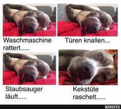 Kekstüte.. | Lustige Bilder, Sprüche, Witze, echt lustig