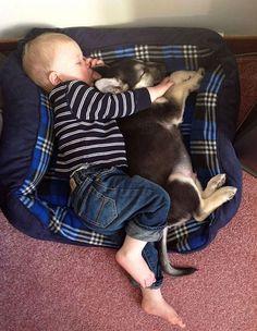 crianças-com-cães-6