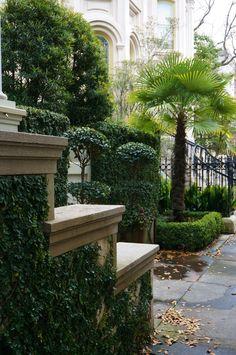 Ficus pumila, Ligustrum topiary, Trachycarpus Ficus Pumila, Topiary, Outdoor Ideas, Garden Landscaping, Coffee Shop, Sidewalk, Landscape, Plants, Front Yard Landscaping