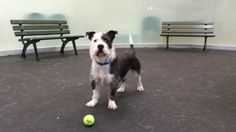 8/26/16 - Perfect Pet is a weekly segment on ABC7 News that features pets up for adoption from Bay Area animal shelters.
