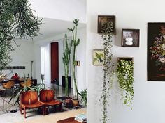 ivy in wood shadowboxes via @A Pair & A Spare