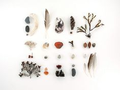 Beachcombing series No.14 - 8 x 10 photograph - feathers, seaweed, crab shell, beach stones via Etsy