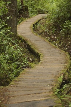 Rainforest Path by Brian Garrett (vladeb) This was a boardwalk in Olympic National Park out to Alava Beach.