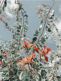 Find images and videos about summer, flowers and wallpaper on We Heart It - the app to get lost in what you love. Aesthetic Backgrounds, Aesthetic Iphone Wallpaper, Aesthetic Wallpapers, Nature Aesthetic, Flower Aesthetic, Photo Wall Collage, Picture Wall, Tumblr Wallpaper, Wallpaper Backgrounds