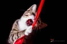 Cat Catching Red Lint by groblerinus Cat Photography, Photography Tutorials, Amazing Photography, One Light, First Photo, Kittens Cutest, Great Photos, Photo Galleries, I Am Awesome