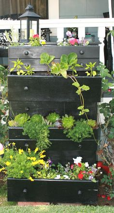 This tall dresser was planted with  a variety of succulents and cottage flowers.