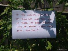 Tomato thief