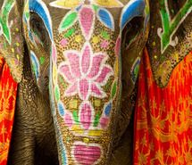 Inspiring image colorful, elephant, ganesha, india #207224 - Resolution 465x700px - Find the image to your taste