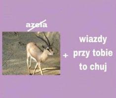 Po co brać leki jak można brać mEmE # Humor # amreading # books # wattpad Wtf Funny, Funny Memes, Fat Memes, Sweet Memes, Polish Memes, Heart Meme, Cute Love Memes, Pick Up Lines, Wholesome Memes