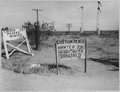 "Old Photo. Highway 80 - ""Cotton Pickers Wanted 75 Cents"". You are purchasing a digital reproduction of the original image. The image you will receive will be printed on the highest quality archival photographic paper. Roadside Signs, Yakima Valley, Maricopa County, Still Picture, Photo Maps, National Archives, Photographic Prints, Old Photos, Missouri"
