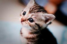 kucing kecil lucu imut
