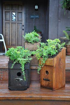 Living roof bluebird houses...  rebeccasbirdgardens.com
