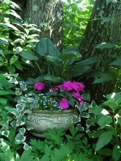 Outdoor Garden Design From Fine Gardening magazine Shade Garden Plants, Garden Planters, Shaded Garden, Bamboo Garden, Garden Shrubs, Container Plants, Container Gardening, Container Flowers, Beautiful Gardens