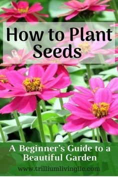 Container Gardening For Beginners One of the most economical and easy ways to start a flower or vegetable garden is to plant seeds directly into your garden. Here are some quick tips for planting seeds in your garden. Beautiful Flowers Garden, Beautiful Gardens, Gardening For Beginners, Gardening Tips, Flower Gardening, Kitchen Gardening, Gardening Services, Gardening Gloves, Planting Flowers From Seeds