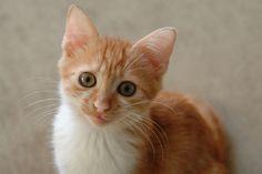 When Piqu was a kitten:)