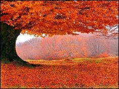 Find images and videos about nature, autumn and orange on We Heart It - the app to get lost in what you love. Fall Pictures, Pretty Pictures, Francis Hallé, Autumn Scenes, Amazing Nature, Beautiful World, Trees Beautiful, Autumn Leaves, Fall Trees