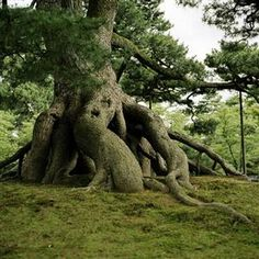 .Roots