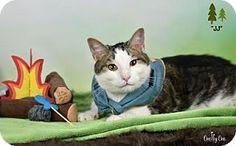 Philadelphia, PA - Domestic Shorthair. Meet JJ, a kitten for adoption. http://www.adoptapet.com/pet/18647625-philadelphia-pennsylvania-kitten