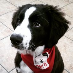 Chien Mira, Husky, Best Friends, Puppies, Dogs, Cute, Pets, Animaux, Beat Friends