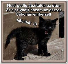 Lol, Memes, Funny, Animales, Humor, Meme, Funny Parenting, Hilarious, Fun