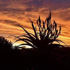 "JustFor2Wilderness op Instagram: ""sunset in Wilderness #holidayaccommodation #gardenroute #honeymoon #romanticstay…"" Wilderness South Africa, Holiday Accommodation, Romantic Getaway, National Parks, Ocean, Sunset, Outdoor, Instagram, Outdoors"