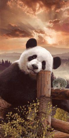 Cute Panda Baby, Baby Panda Bears, Panda Love, Baby Pandas, Giant Pandas, Cute Wild Animals, Animals Beautiful, Funny Animals, Majestic Animals