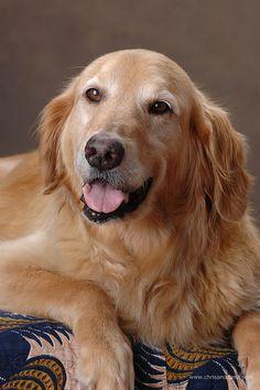 Low Country Golden Retriever Rescue « Chris and Cami Photography Blog
