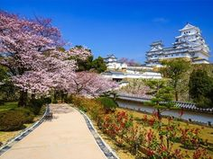 Himeji Castle in spring cherry blossom season, Hyogo, Japan | 10 Reasons Why You Must Forget Europe and Visit Japan During Spring Season