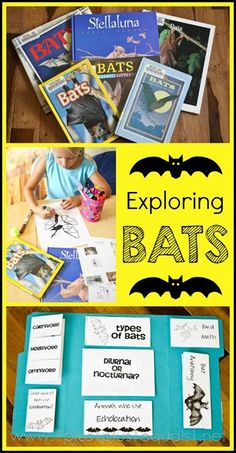 Exploring Bats ~ Bat Lapbook and Unit Study