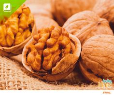 Nozes é um fruto seco consumido de forma natural que pode ainda ser usado em receitas. Seu consume oferece uma grande quantidade de benefícios para a saúde, já que contém uma grande quantidade de minerais e vitaminas.