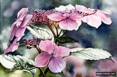 Акварельные сады Марни Вард (59 фото) | Релаксик