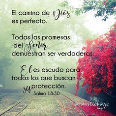 """""""El camino de Dios es perfecto. Todas las promesas del Señor demuestran ser verdaderas. Él es escudo para todos los que buscan su protección."""" Salmo 18:30  NTV  https://sendaseternas.blogspot.com.es/2017/05/versiculo-biblico_26.html  #Versiculobiblico #Biblia #Dios #camino #promesas #protección #Sendaseternas"""