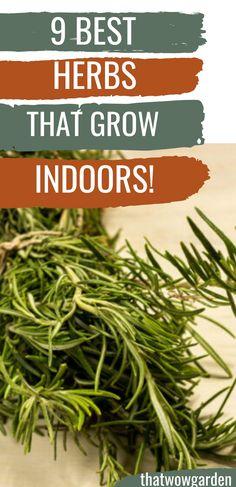 9 Herbs that Thrive Indoors | Herbs to Grow Indoors#grow #herbs #indoors #thrive Herb Garden In Kitchen, Kitchen Herbs, Best Herbs To Grow, Growing Herbs Indoors, Best Starters, Lower Lights, Organic Herbs, Succulent Terrarium, Potting Soil
