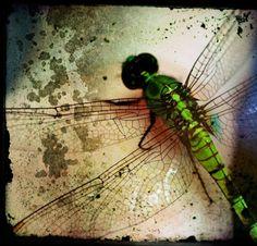 #dragonfly #green