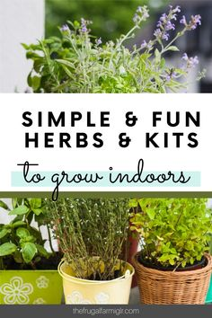 Growing indoors is a lot of fun. There are plenty of perks too- like no outside bugs to deal with. My kids love starting an indoor herb garden. Growing Herbs At Home, Herb Garden Kit, Gardening Tips, Frugal, Bugs, Harvest, Seeds, Planters, Green