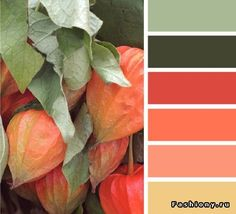 Chinese lantern color pallet